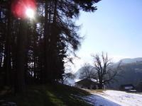 Collalbo trees