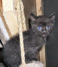 Baby Kittens 2