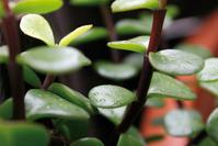 Plants series 1