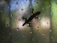 Lagartija 1 small lizard