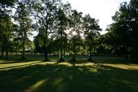Trees & Shadow