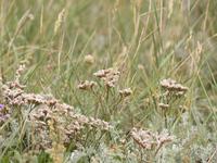 Nature Texel