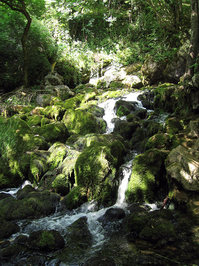 River of Grza