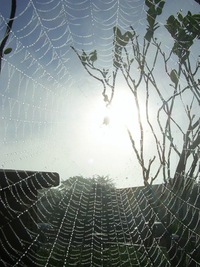 Spiders Web in Morning dew 2