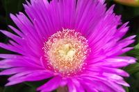 flower on Elba 1