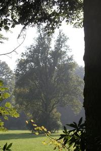 Tree in the sun 1