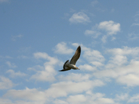 Bird in the Air