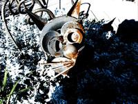 Iron Cat 1