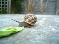 Snail Days 1