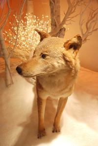Xmas wolf