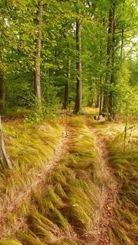 wood path 2