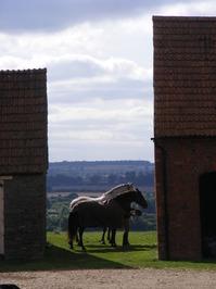 Horses in a Gap