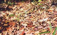 nature stock photos 2
