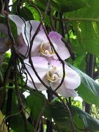 Moody Garden Orchids 4