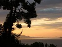 sunset with pinea tree