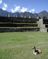 baby alpaca - machu picchu