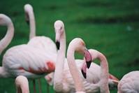 Flamingo Cascade