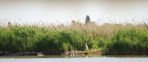 Wildlife at Lake Velencei