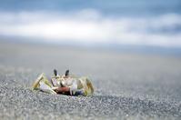 Crab at the beach in Sengiggi