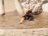 Bear bath 2