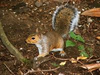 The Nut Hunter