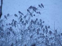Winter birds - closeup