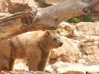 bear at the zoo - 2