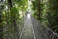 Bridge over the trees