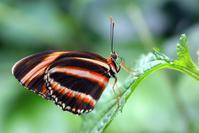 Butterfly Macros 5