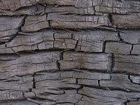 texture - burnt wood 3