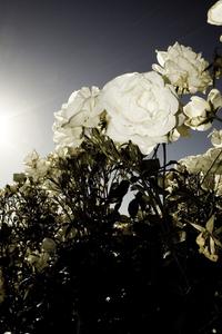 Flowers in botanical gargen 2