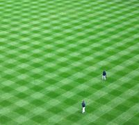 Yankee Grass