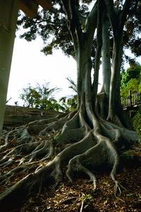Balboa Park Crazy Tree