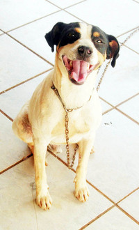 Dog Tibby