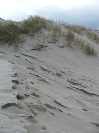 wandering dune