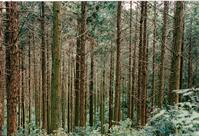 Hokaido Forest