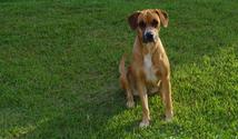 Cachorra 2