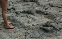 dinosaur and human track