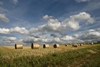 Hay rolls