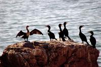 Pacific Ocean Birds