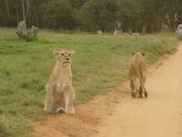 Posing Cubs
