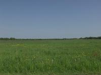 Frisian Meadow