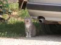 smiling cat