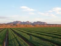 desert farms 5