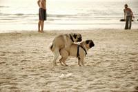 Doggy Style Love