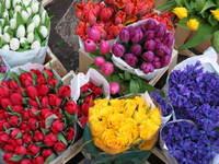 Portobello blooms