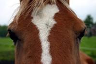 Horse eye II