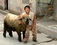 Xalatlaco boy and his sheep