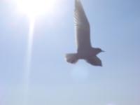 into freedom