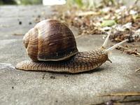 Snail, pt2 :]
